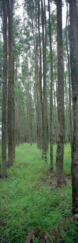 170_tree_farm.jpg