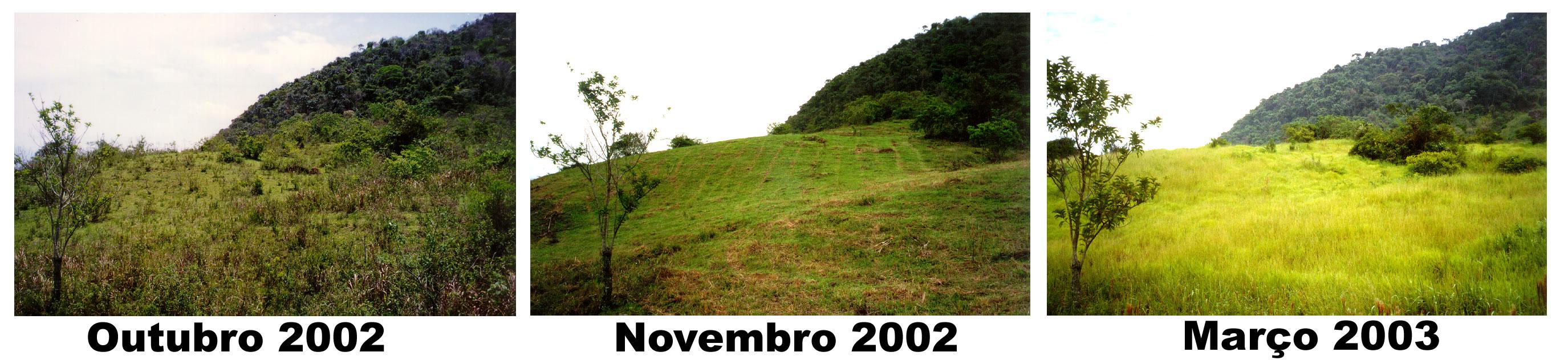 brazilalbertolandscape.jpg