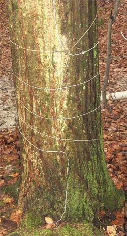 tree_wrap.jpg